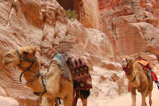 autotour en jordanie